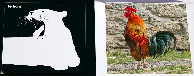 Imagier des animaux - François Delebecque